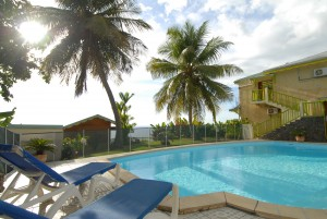 piscine_palmiers