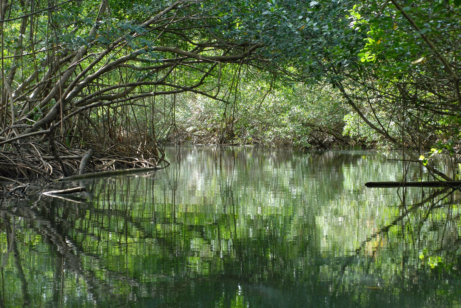 La mangrove de Grand Cul de Sac Marin, a voir !